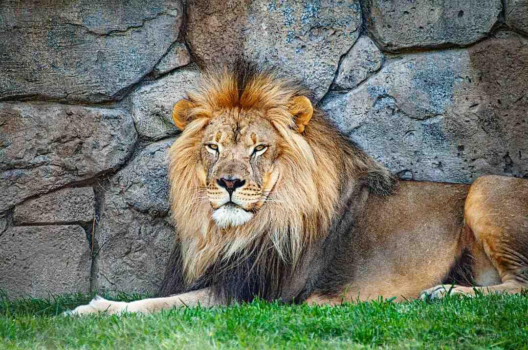 Comment séduire un homme Lion